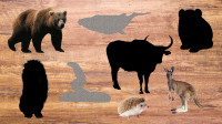 学习认识棕熊、袋鼠等8种陆地动物