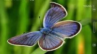 梦中的蝴蝶《2020,4,12》