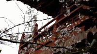 合肥紫蓬山《樱花亭》_雁飞晨光