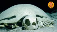 4个难以置信的海底发现,海龟墓地中的海龟竟是被活活淹死的?