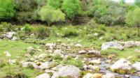 大通县灌木林(5)古筝曲 风含情 水含笑