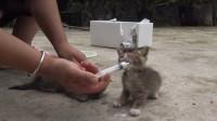 农村姑娘捡来三只流浪猫,差点都要死了,所幸被这善良的姑娘所收养