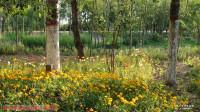 西宁市南山公园(1)歌曲-美丽青海