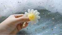 【钩针花朵】毛球花蕊让雏菊更逼真