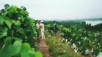 风景优美的葡萄园