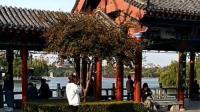 竖版小视频《济南大明湖公园司家码头》