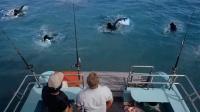 几人在海里钓丧尸,钓到一群会游泳的丧尸,一部搞笑丧尸电影