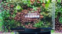 小米透明电视上手:最像艺术品的电视,用起来怎么样?