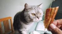说不出来你可能不信,我在和一只猫抢鱼干吃!是猫馋还是我馋?