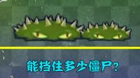 pvz2:变大后的地刺能挡住多少僵尸?你能猜到几个