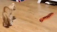 猫精遇到蜈蚣精