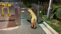 狗子:绿灯没毛病啊,交通法改了?
