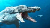 比巨齿鲨还可怕的海洋生物(二):它体型巨大,鲨鱼都是它的猎物
