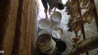 水稻哥 第115集 荒野生存 原始技能 建造一个 卫生间