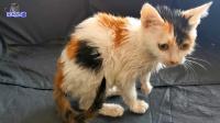 小流浪猫手术后没瘦反胖,洗完澡后变化真大,乖巧的样子让人心疼