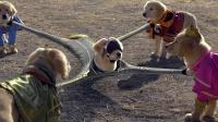 五只狗狗获得神奇项圈,拥有了各种超能力,成为超级英雄!