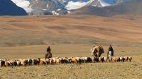 蒙古族不愧是马背上的民族,他们的生活不断在移动 狂野地球 20210119