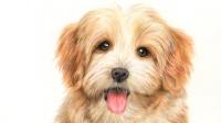 彩铅课 彩铅公开课丨小狗狗2