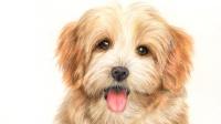 彩铅课 彩铅公开课丨小狗狗3