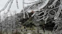 受降雪影响!毕节市多所学校明日将停课一天