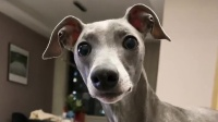 一个视频告诉你,狗狗露牙齿到底有多可爱