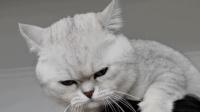 千万不要去惹怒一只猫咪,否则就是这种下场