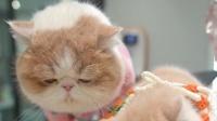 同样是加菲猫,为何吃饭的方式如此不同?