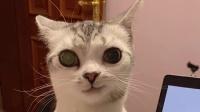 要不是监控拍下来,我都不敢相信 一只猫这么会玩捉迷藏