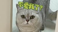 养只绿茶猫是种什么体验?反正是挺欠揍的