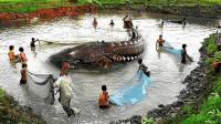 黑龙江渔民捕到中国最大淡水鱼,重达千斤,专家看后出言警告?