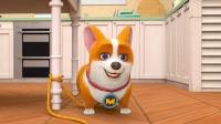 飞狗MOCO只家有小短腿 第一集 MOCO的减肥之路