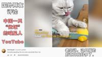 """中国主人神操作让这只""""喵星人""""火到外网,YouTube外国网友:料理猫王!"""