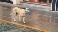 狗狗出门都知道戴口罩了,你还有什么理由不戴?