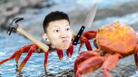 螃蟹大战!非常普通的鹿和螃蟹们联动了!鲤鱼Ace解说