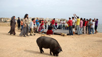 豆瓣7.7,穆斯林大叔养了一头猪,一部以黑色幽默来审视中东冲突问题的影片