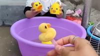 童年趣事:小鸭子要找妈妈了