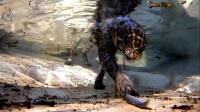 """女子野外救回一只猫,不但不怕水,还能在""""水下憋气""""好几秒!"""