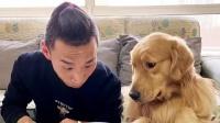 狗狗主动跟主人分享饺子,主人以为它懂事了,结果很是扎心