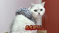猫咪那么信任你,你却这么骗它,它能不生气吗?