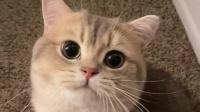 谁家有这样的小猫咪,麻烦给我来一箩筐