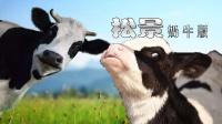【小握解说】牧场全开放 难度升级《松景:奶牛篇》第3期