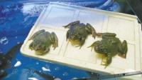 杭州食品安全抽检结果!牛蛙、河虾、年糕等10批次样品不合格