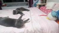 6月的小猫咪太可爱了,看他们的玩的太开心了 无忧无虑