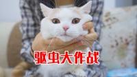 一次性给5只猫驱虫,一只比一只乖,养了一群假猫?