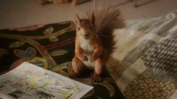 这松鼠不仅能听得懂人话,而且还会打字