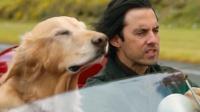 狗狗陪伴主人十年,能听懂人话还能帮主人报仇,简直就是人间天使