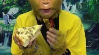 童年趣事:猴哥爱美食,吃个大披萨