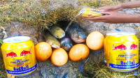 鸡蛋和红牛也能捕鱼?印度小伙亲自测试,结果鱼儿抓到手软!