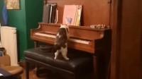 我家这是养了一只贝多喵吧 弹得还挺好听
