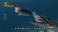 黄金时期的发现湾,充满了勃勃生机,生活着各种鱼类